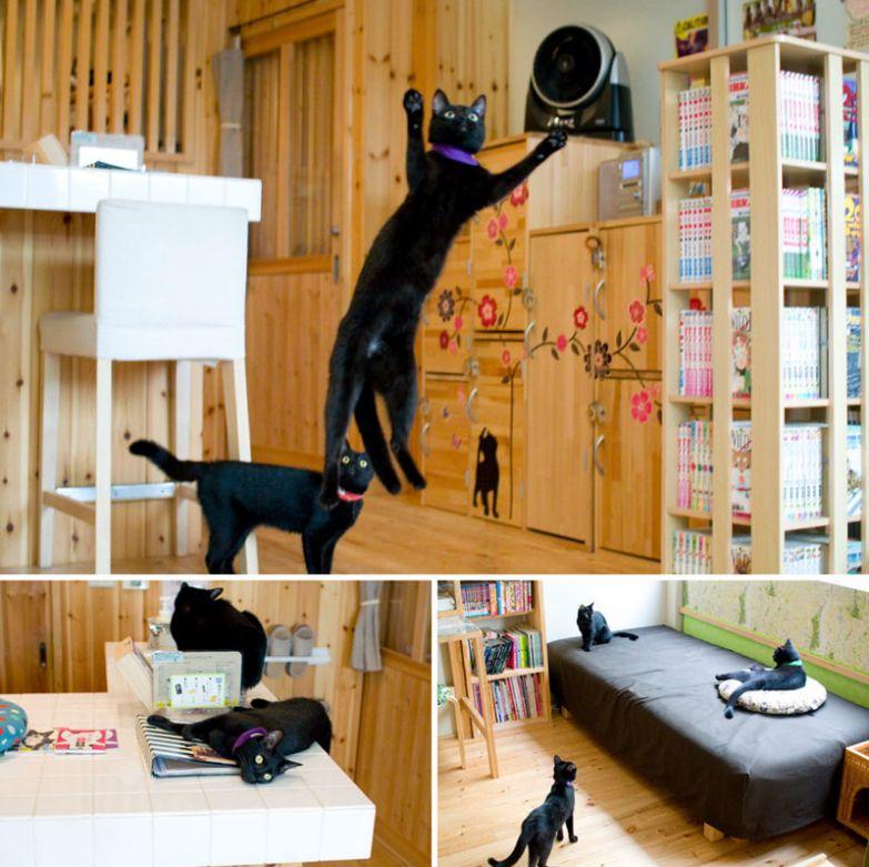 Ресторан черных кошек, Nekobiyaka, Химедзи, Япония мир, подборка, ресторан