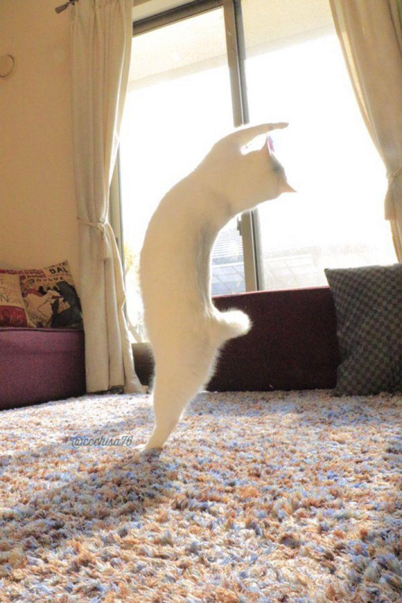 Эта кошка танцует так, будто никто ее не видит кот, танец