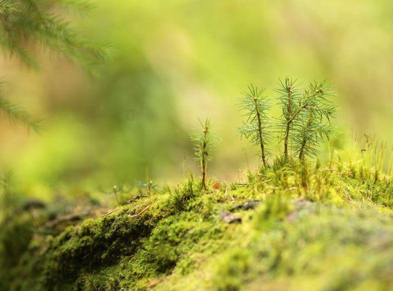 Смерть порождает жизнь: как упавшие деревья спасают лес