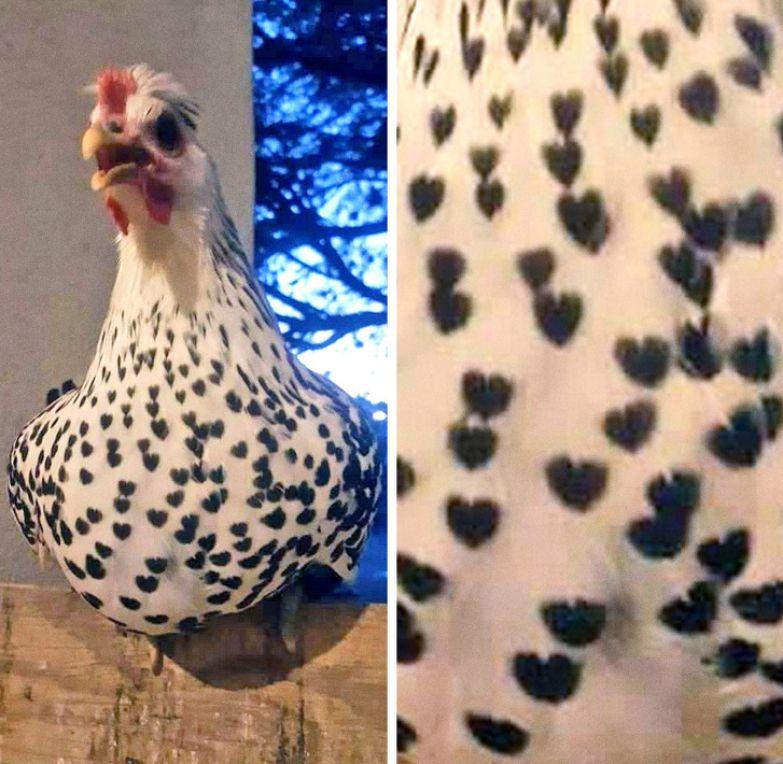 20 животных, которые урвали у природы настоящую изюминку
