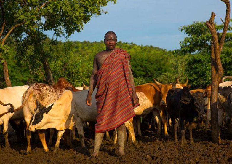 Коровы - главное богатство в племени боди.