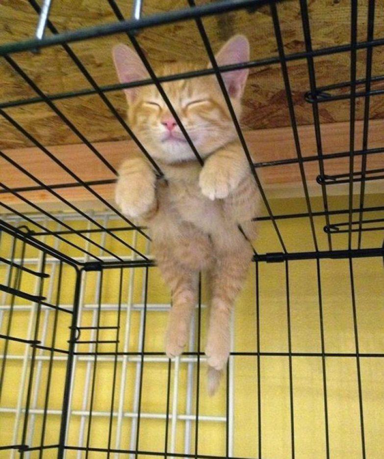 43. Тоже комфортное место животные, кошка, сон