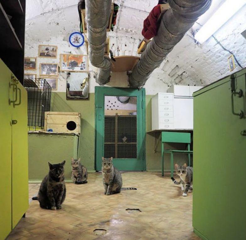 В подвалах Эрмитажа живут 50 котов, которые ждут своих хозяев. Давайте вместе им поможем