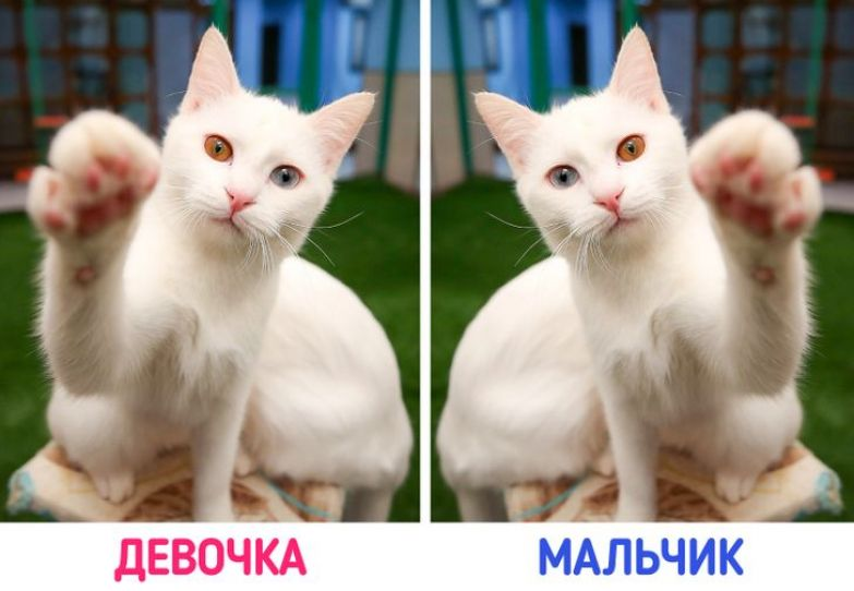 12 фактов, которые доказывают, что над проектом «Кошка» природа поработала особенно тщательно