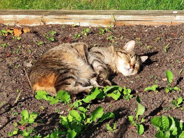 20+ животных, которые умеют всегда найти себе удобное местечко, а потом хоть трава не расти