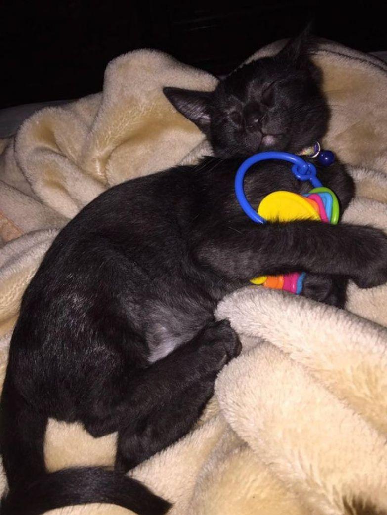 20+ человек, которые взяли домой котенка и по уши влюбились в это мелкое озорное чудо